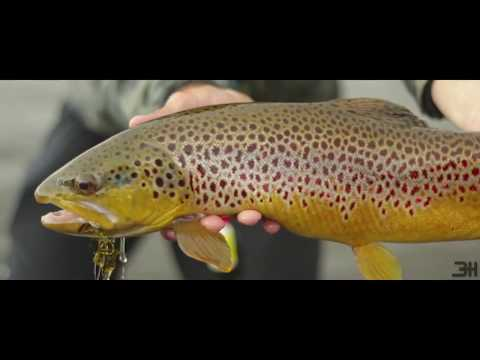 FLY FiSHiNG IN STEAMBOAT CO || Brown Trout Swervin'