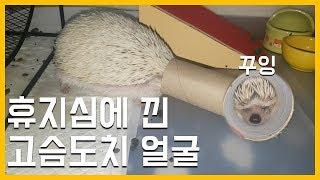 휴지심에 낀 고슴도치 얼굴  (Feat.나의 단잠을 깨운 벌)