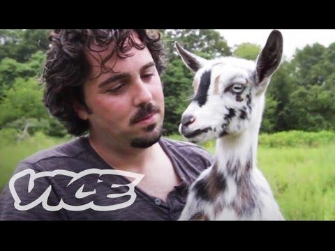 Cute Pygmy Goats!