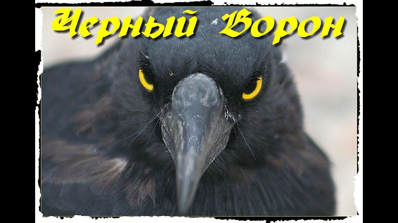 Черный ворон песня слушать видео