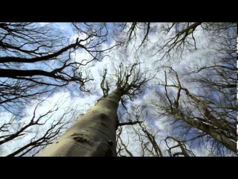 David Darling - Beautiful Life