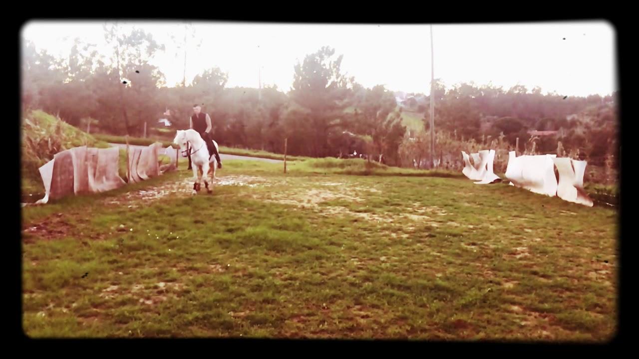 Aleluia Horse Dreams-Ensinando Cedência À Perna