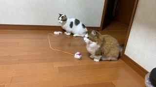 持ち逃げ癖のある猫
