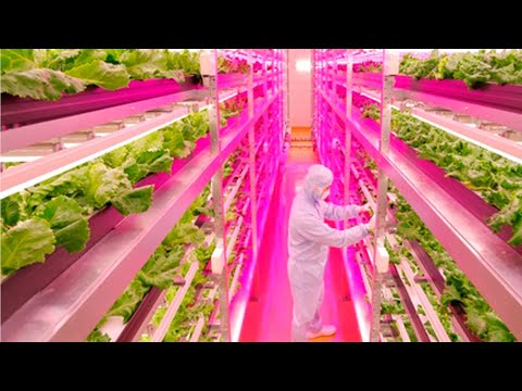 Agricultural revolution: New method to grow lettuce; Vertical farming explained - Compilation