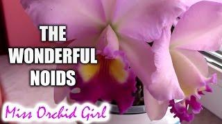 The wonderful NoID Cattleya Orchids + 1 weird species