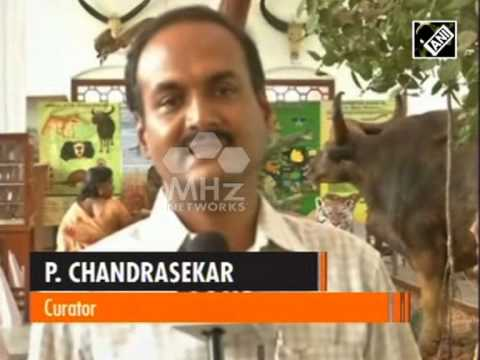 Forest museum attracts crowd in southern India (SAN - 30 June, 2015)