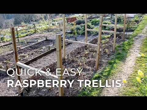 Quick & Easy DIY Raspberry Trellis
