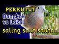 Perkutut Bangkok Vs Lokal Saling Saut Sautan Mantul Jos  Mp3 - Mp4 Download