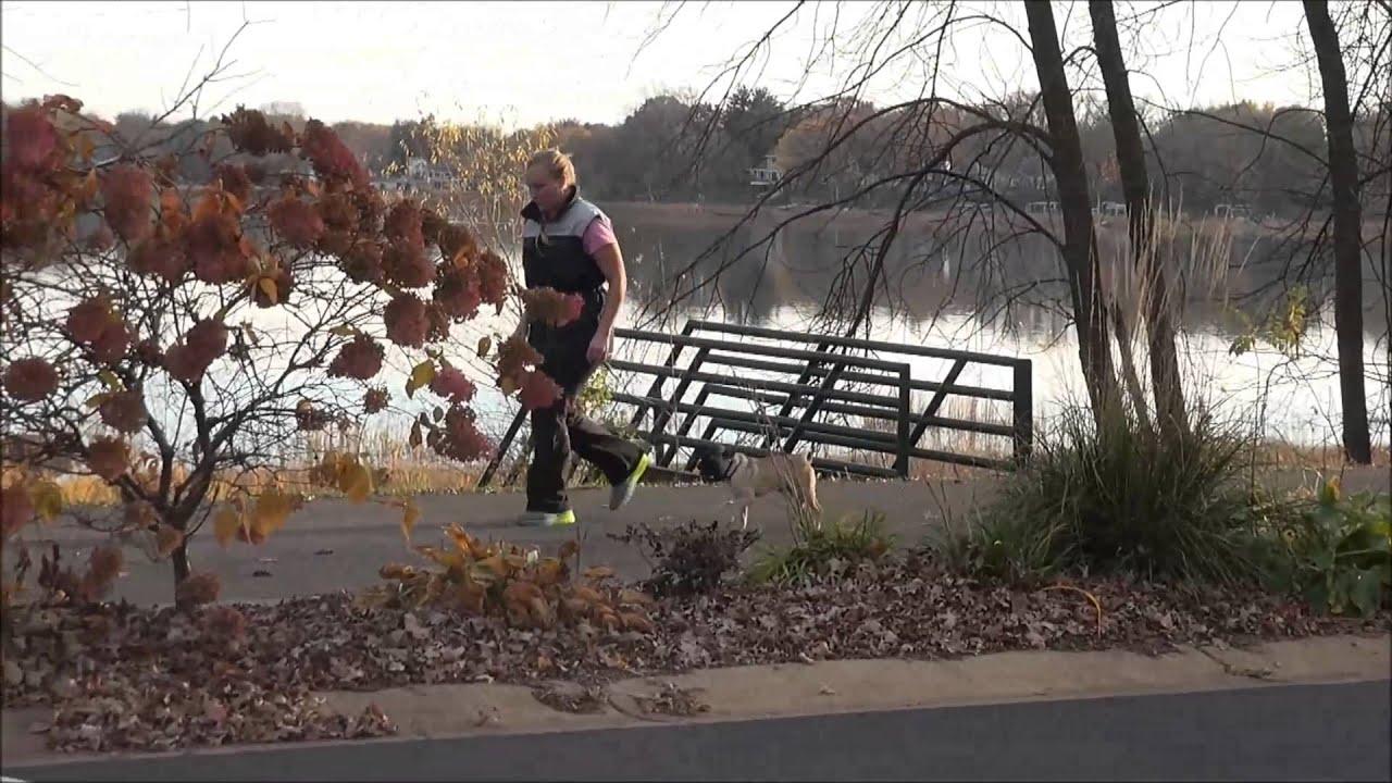Olive (Bug - Boston Terrier X Pug) Boot Camp Dog Training Video