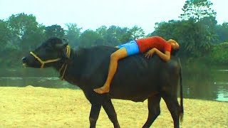 Gambar cover OMG Girl Riding a Buffalo You will be amazed after watching this video