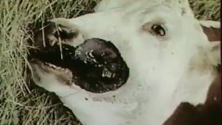 Dossiers OVNIS / Les Mutilations animales/ Vidéo sortie en 1998.