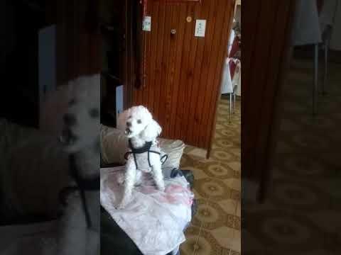 Aullido Del Lobo Blanco