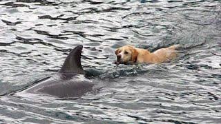 Tory Island Dog & Dolphin