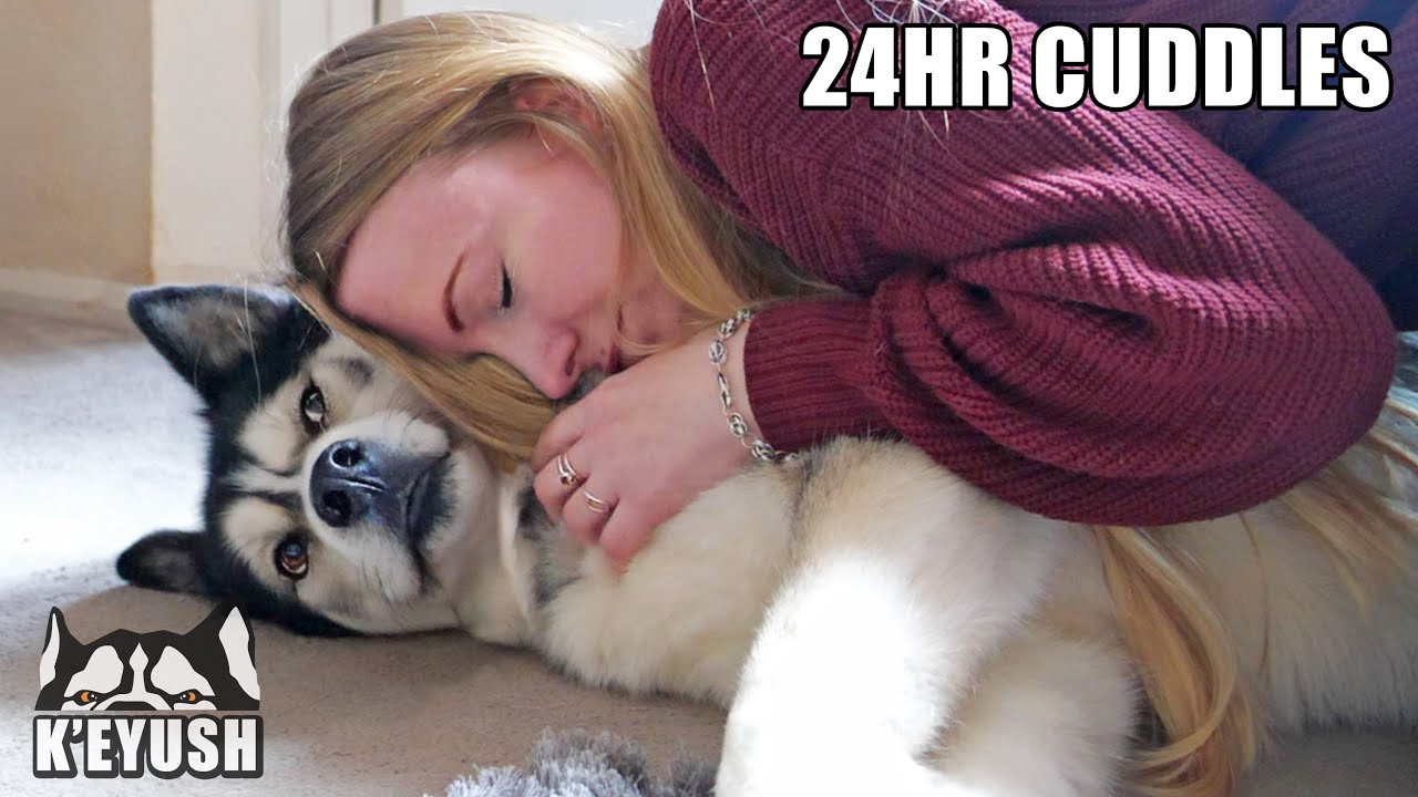 Hugging My Husky Every Time I See Him for 24 Hours! - download from YouTube for free