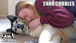 Hugging My Husky Every Time I See Him for 24 Hours!