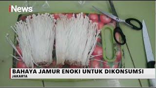 Terbukti Sebabkan Listeria, Kementan Musnahkan Jamur Enoki di Indonesia.