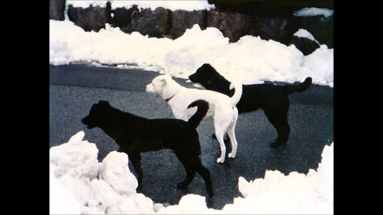 """童謡 ♪雪 A Japanese children's song """"Snow"""" or """"Yuki"""" - YouTube - photo#34"""
