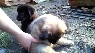 Интересные щенки(, 2017-06-12T20:20:07.000Z)