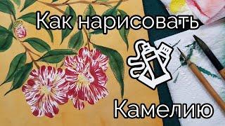 Как нарисовать Камелию видео урок How to Draw Camellia flower 동백꽃 그림 그리기