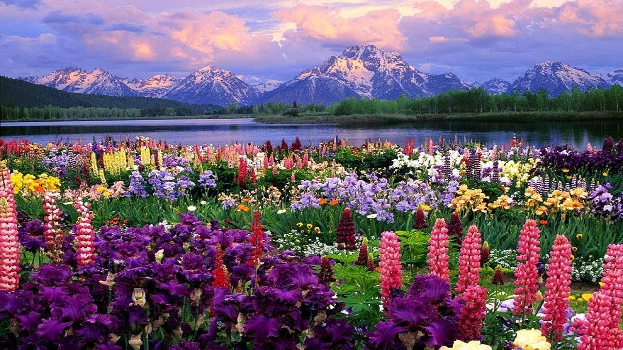 Beautiful Nature Wallpapers Beautiful Wallpapers Wallpaper Images Beautiful Images Of Nature Youtube