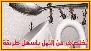 تخلص من النمل بطريقة طبيعية بدون مبيدات حشرية.. فيديو