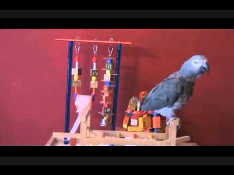 African Grey Jerry Talking Volume 2 by FunTime Birdy