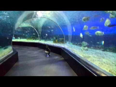 Ocean Park Manila @ Aquarium