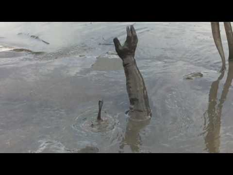 Mud diving in the Savannah River