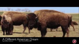 14th Red Nation Film Festival 2017 The Authentic Voice of American Indian & Indigenous Cinema