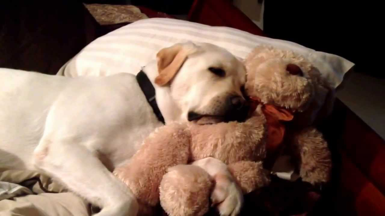 """Bradey the Dog says """"Goodnight and Sweet dreams"""" - YouTube"""