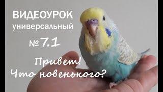 """🎧 Учим попугая говорить. Урок №7.1: """"Привет! Что новенького?"""""""