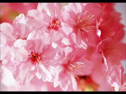 Vẻ Đẹp Của Loài Hoa_장윤정의 꽃