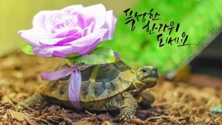 [무천Tv] 추석인사와 함께 육지거북 꽃 먹방!