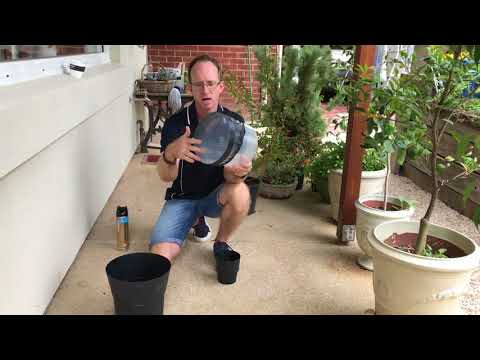 How To Set A Mosquito Trap (BG GAT Type) At Home