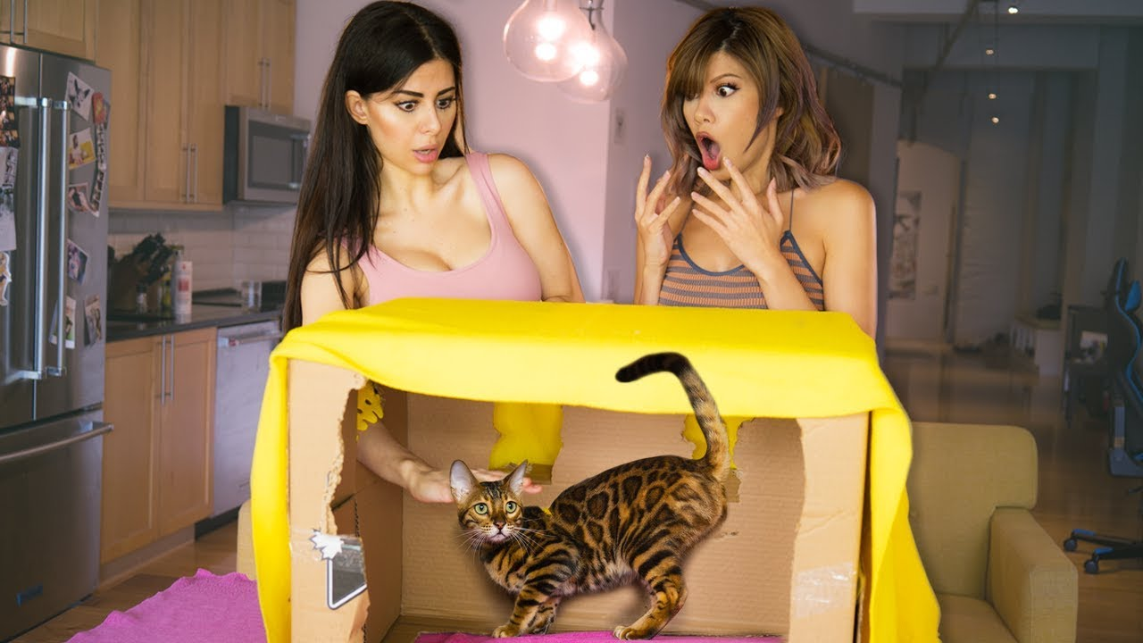 WHAT'S IN THE BOX CHALLENGE (EXOTIC ANIMALS) with Azzyland!