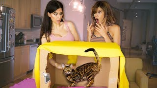 Download WHAT'S IN THE BOX CHALLENGE (EXOTIC ANIMALS) with Azzyland! Mp3 and Videos