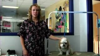 Dog Grooming : How To Groom A Shih Tzu