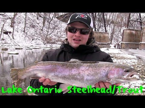 Lake Ontario Winter Steelhead & Trout