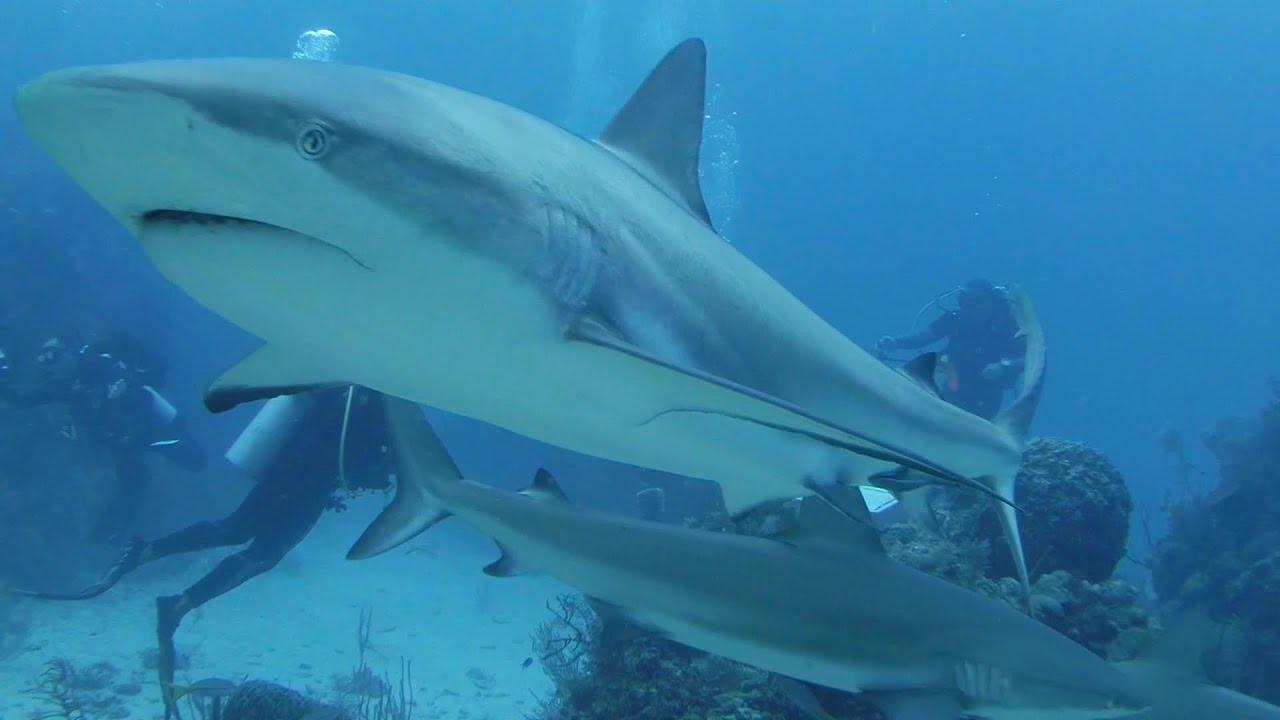 Best Of Shark Diving