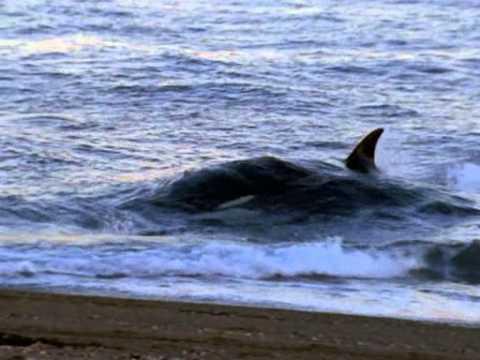 Odc 6 Orka morski zabójca 3