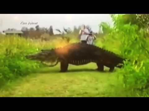 trending now prehistoric huge giant alligator youtube