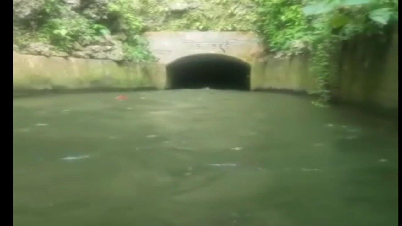 Cadáver arrastrado en Isabela, Puerto Rico