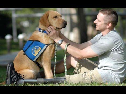 como educar a tu perro: Manual de adiestramiento canino
