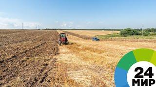 Битва за урожай: будут ли белорусы с хлебом