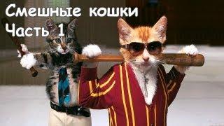 Смешные коты и кошки - видео приколы с кошками #1