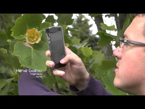 plantnet identification plante applications sur google play. Black Bedroom Furniture Sets. Home Design Ideas