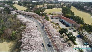 ★ 2020.04.04 경주 벚꽃놀이 드론촬영(드론, …