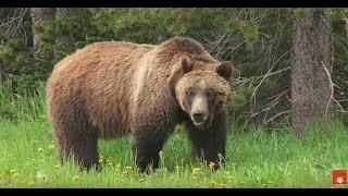 Photographing Wyoming Grizzly Bears - Wild Photo Adventures
