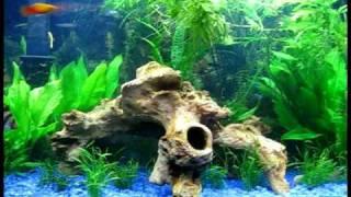 40 Gallon Planted Aquarium [t5, Diy Co2]