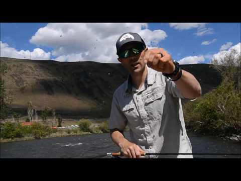 TWO Critical Dry Fly Fishing Tips!